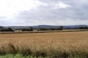 Farmland south-east of Elstow