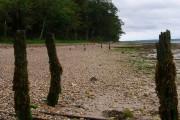 Shoreline near Ryde House