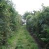 Towards Llwynhelig