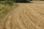 Wheat stubble and footpath, Yardley Hastings