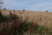 Harvesting near Middlecot