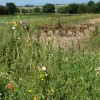 Farmland near Southrepps Road