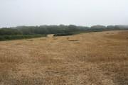Instow: near Bickleton Cross