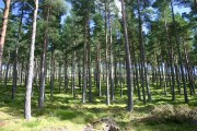Woods of Knockfrink