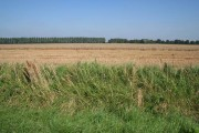 Farmland near Holbeach