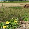 Pumpkins and farmland near Tungate