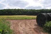 Farmland under Birch Wood