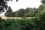 Corner of the woodland on Ruyton Moss