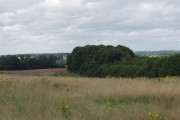 Vales Wood from the bridlepath up The Cliffe