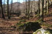 Woodland below Low Crag