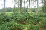 View through wood towards Frostenden Corner