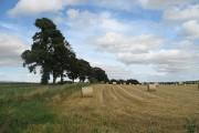 Newmill of Castleton