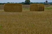 Fields near Tranby Croft