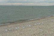 Lee-on-the-Solent: birds, marker, view of power station