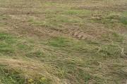 Farmland near Druridge Bay Country Park
