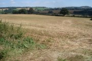 Wheat field near Brockhampton