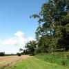 Woodland near Beeston St Lawrence Church