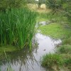 Pond in Cowslip Meadow