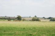 Cows on farm near Fifehead Magdalen
