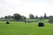 Silage bales on farm near Fifehead Magdalen