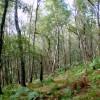 Birch woodland below Froggatt Edge