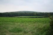 Bishop's Tawton: towards Codden Hill