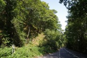 Gratleigh Wood