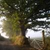 Dartridge Lane