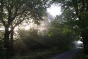 Woodland near Ford Cross