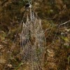 Spider's web, Bourne