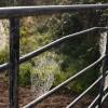 Webby gate