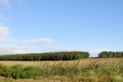 Unnamed wood across Fields from Sprotborough Road.