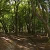 Footpath through Wellgrove Wood
