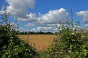 Farmland near Trip's Farm