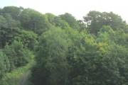 Coed Pen-y-bryn above Afon Seiont