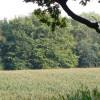 Maizefield by Yewtree Farm
