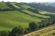Hillside at Loscombe