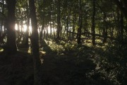 Woodland beside Rora Down