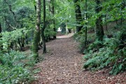 The Saint's Way in Warren Wood