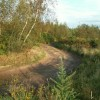 Track through Cistern Wood