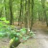 Greatlee Wood