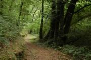 Track through Coombe Wood, near Roborough