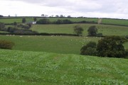 Fields near Petrockstowe