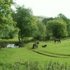 Exmoor ponies by the Mill Beck