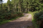Bere Wood