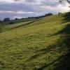 Field at Whiteland Head