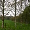 Copse near Catmore Farm