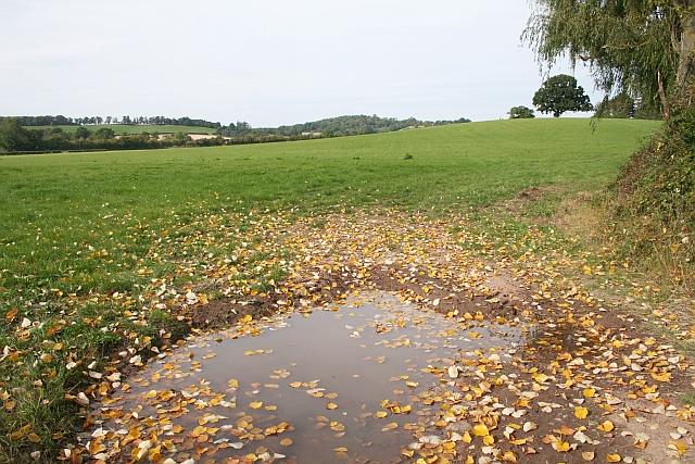 Pasture near Cold Green