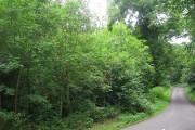 Woodland Drive