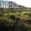 Common Moor